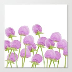 Allium Canvas Print
