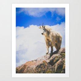 Goat Series, IV Art Print