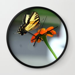 Swallowtail Butterfly on Mexican Sunflower Wall Clock