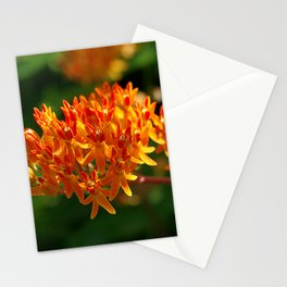 Butterflyweed, Asclepias tuberosa Stationery Cards