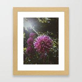 Lush Sunbeam Framed Art Print