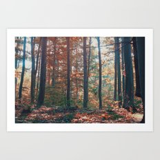 into the woods 13 Art Print