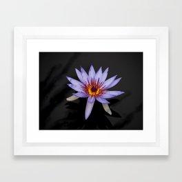 Floating Orchid Framed Art Print