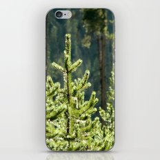 Young Lodgepole Pines after a rain iPhone & iPod Skin