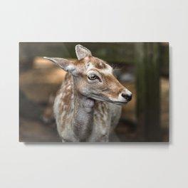 Spotted Deer Metal Print
