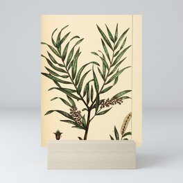 Silver-leaved Willow, salix argophylla Redoute Roses 3 Mini Art Print