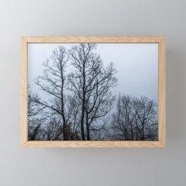 Naked tree in a foggy day Framed Mini Art Print