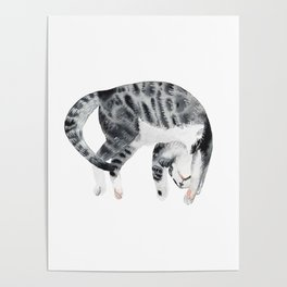 Yoga cat Poster