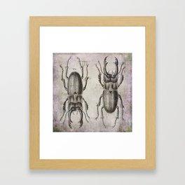 Grunge Style Stag Beetle Framed Art Print