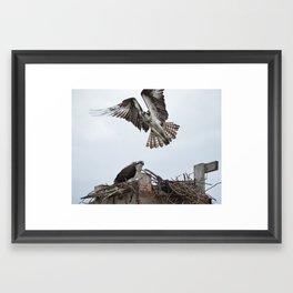 Osprey Nest Framed Art Print
