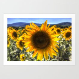 Sunflower Summer Art Print