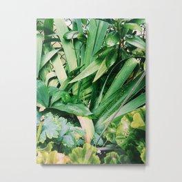 Sunny Plants Metal Print