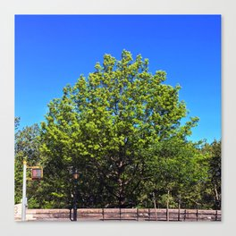 Riverside Park Tree Canvas Print