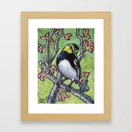 Golden Cheeked Warbler Framed Art Print