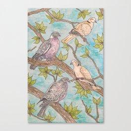 Various Pigeons Canvas Print