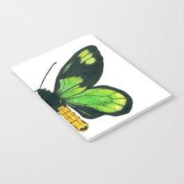 Queen Victoria's birdwing butterfly Notebook