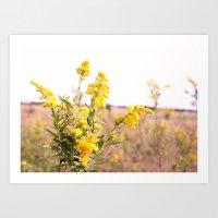 Wildflowers of Autumn Art Print