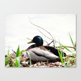 Chilling on the shore Canvas Print
