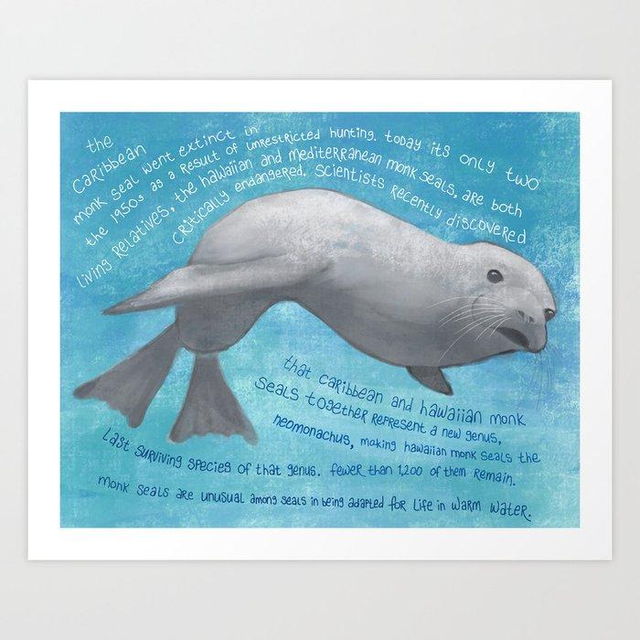 Caribbean Monk Seal Art Print