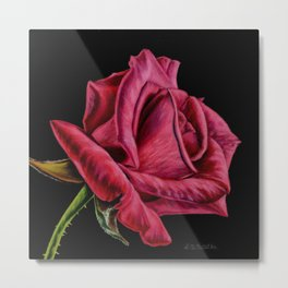 Red Rose On Black Square Format Metal Print