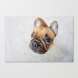 Cute french bulldog Canvas Print