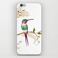 hummingbird iPhone & iPod Skins featuring hummingbird by Ariadne