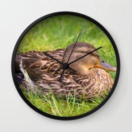 Female Mallard Duck Wall Clock