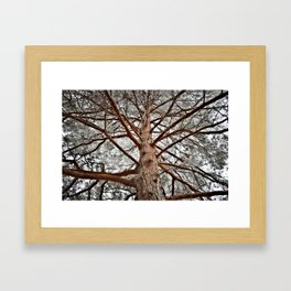 Looking up to you... Framed Art Print