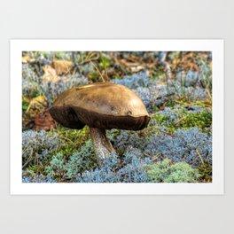 mushroom in swedish forest Art Print