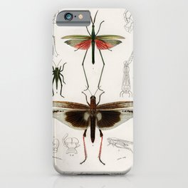 Vintage Print - Universal Dictionary of Natural History (1849) - Grasshoppers, Locusts iPhone Case