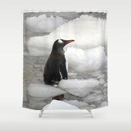 Gentoo Penguin in Ice Shower Curtain
