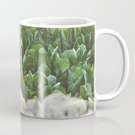 Nature photography, home furnishings, fine art, kitchen wall decor, South Italy, Sicily, Apulia, Coffee Mug