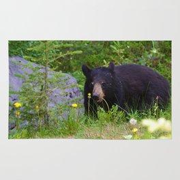 Black bear munches on some dandelions in Jasper National Park Rug