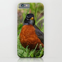 A Curious American Robin iPhone Case