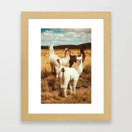 kitty lama Framed Art Print