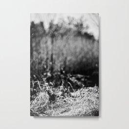 nesting grounds. Metal Print