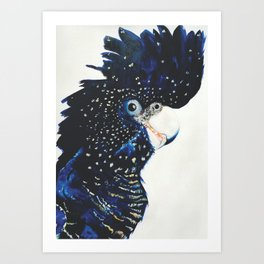 Victoria the Red tailed cockatoo Art Print