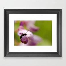 Small visitor Framed Art Print