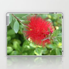 Beautiful Bottle Brush Flower With Garden Background Laptop & iPad Skin