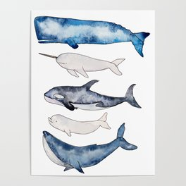 Watercolor orca whale, spermwhale, humpback, narwhal, beluga whales Poster