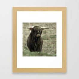 Highland Cattle III Framed Art Print