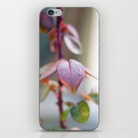 sparkles iPhone & iPod Skins featuring Sparkles by Katie Kirkland Photography