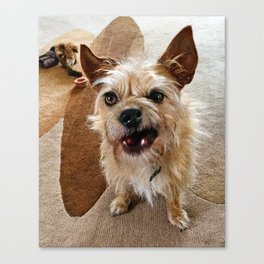 Grumpy Dog Canvas Print