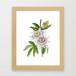 Passionflower Framed Art Print