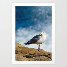 Seagull at Thunder Hole Art Print