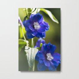 Indigo and Violet Metal Print