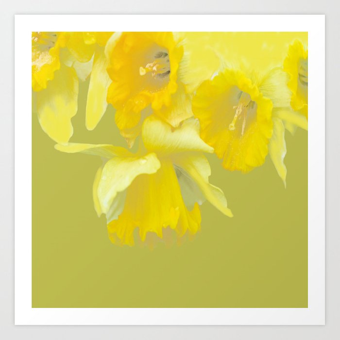 Sign of Spring - Yellow Narcissus on Spring Green Background #decor #society6 #buyart Art Print
