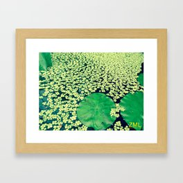 Good Fortune III Framed Art Print