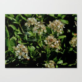 Stopping to Smell the Flowers at the Top of the Mountain Canvas Print