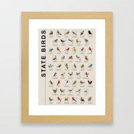 50 State Birds Framed Art Print